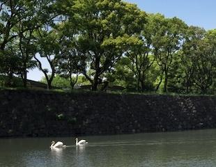 パレスホテル東京 景色 内堀