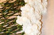 白いカーネーションの献花