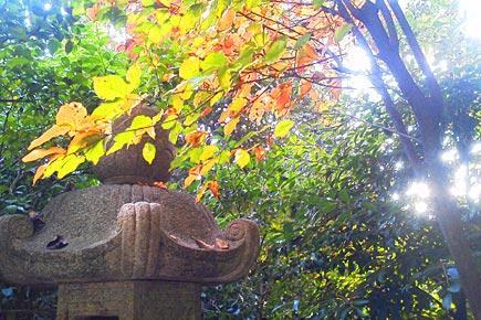 ホテル椿山荘東京 秋の庭園