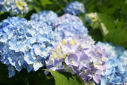 ホテル椿山荘東京 夏の庭園