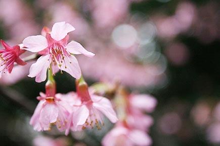 ホテル椿山荘東京 春の庭園