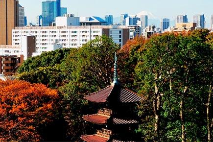 ホテル椿山荘東京 冬の庭園